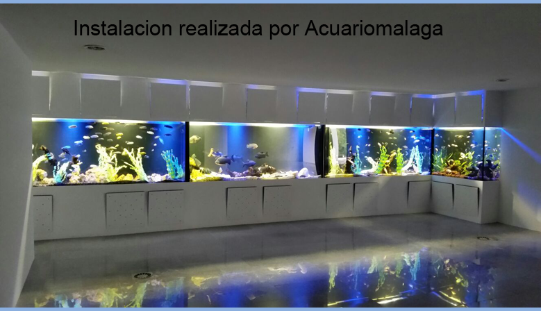 Tienda especializada en acuarios tropicales y marinos for Acuarios a medida